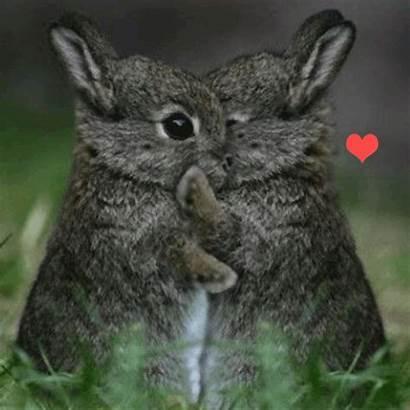 Bunnies Hugging Hug Hugs Happy Bunny Animal