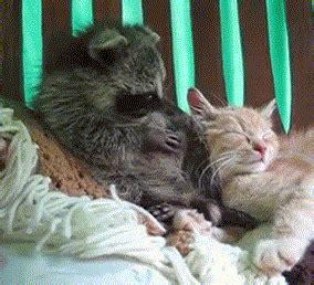 rude  unfriendly animals  gifs izismilecom