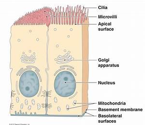 Bio210 - Anatomy