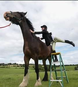 World's tallest horse - Kiwi Kids News