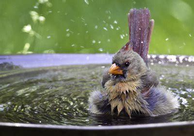 bird baths buying guide  store