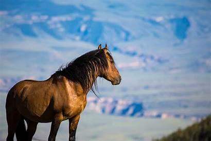 Wild Blm Horse Burro Mustangs Pryor Board