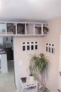 leiter treppe mission wohn t raum für katzen mission wohn t raum
