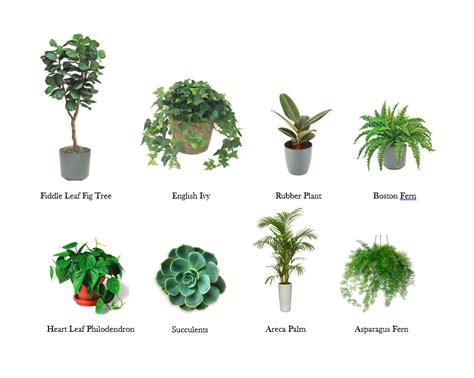 The Dirt On My Favorite House Plants  A Carrie'd Affair Blog
