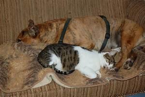 Hund Im Haus : katze hund wohnung haus tiere schlafen ~ Lizthompson.info Haus und Dekorationen