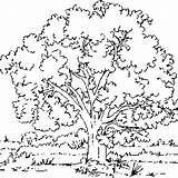 Tree Elm Coloring Printable Designlooter Pages sketch template