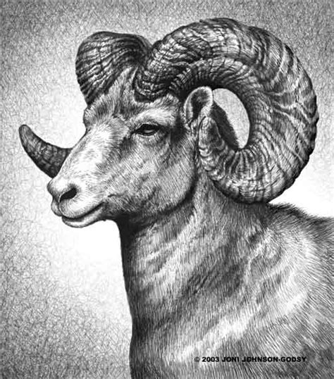 images  aries  pinterest ram skull hawks
