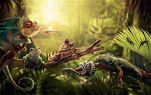 Reptile Wallpapers Wallpaper Cave