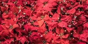 Pflanze Mit Roten Blüten : pflanze mit roten bl ttern download der kostenlosen fotos ~ Eleganceandgraceweddings.com Haus und Dekorationen