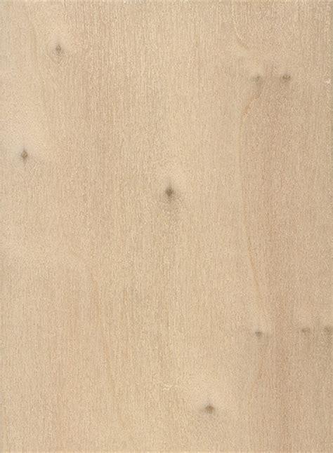 black poplar  wood  lumber identification