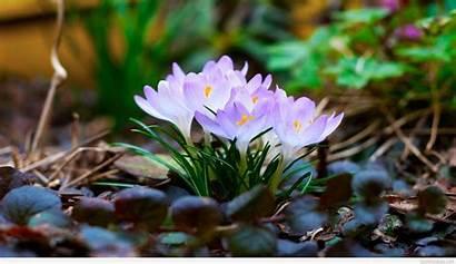 Spring March April Backgrounds Desktop Wallpapers Widescreen