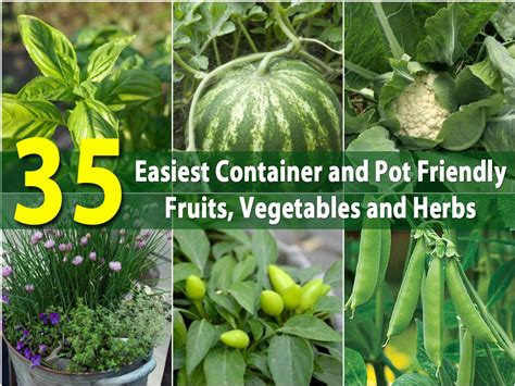 easiest container  pot friendly fruits