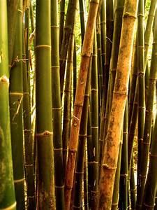 Bambus Im Garten Vernichten : bambus entfernen so wird 39 s gemacht ~ Michelbontemps.com Haus und Dekorationen