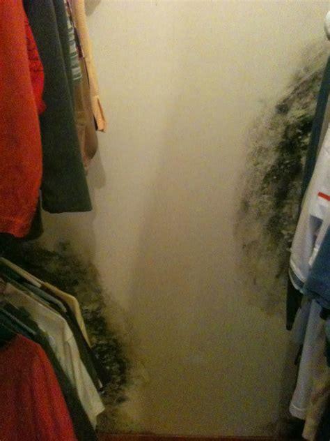 asbestos exposure mold  seepage issues