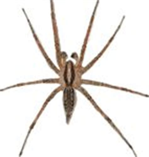 Garden Spider Toxicity by Best 25 Spider Identification Ideas On See
