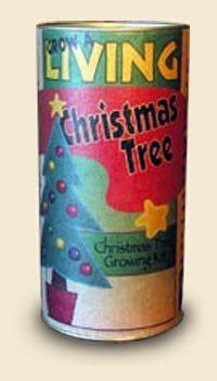 christmas tree growing kit douglas fir tree growing kit import it all