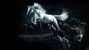 White Horse Wolf Wallpapers HD Wallpaper | 3D & Abstract ...