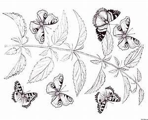 Schmetterlinge, Zum, Ausmalbilder, F, U00fcr, Kinder, 100, Bilder