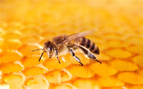 neonicotinoids destroy 600 hives 37 million bees in canada