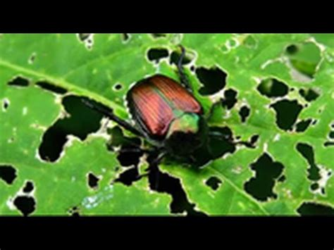 How To Identify And Control Garden Pests On Squash And