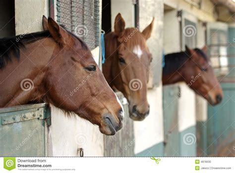 horses   stable stock photo image  ranch
