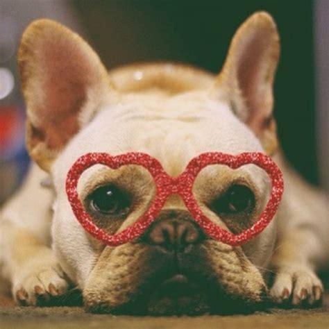 dogs   totally melt  heart  valentines day petsladycom