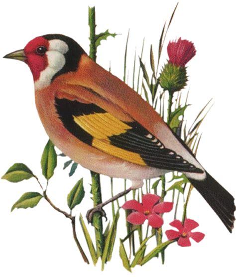 image oiseau fleur tube pour la creation numerique