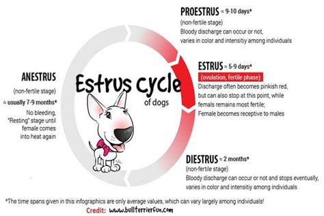 how does a stay in heat dog s cycle how long does a dog stay in heat