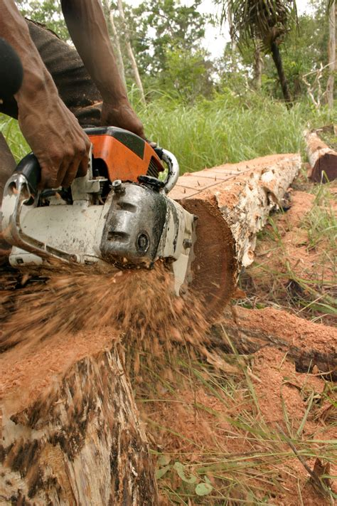 illegal logging  timber trafficking environmental