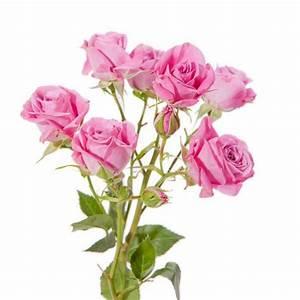 envoyer des fleurs par internet avis ciabizcom With affiche chambre bébé avec envoi bouquet de fleurs