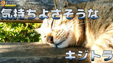野良猫 の 気持ち
