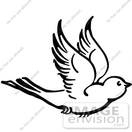 parrot clipart black and white sparrow clipart flight drawing pencil and in color