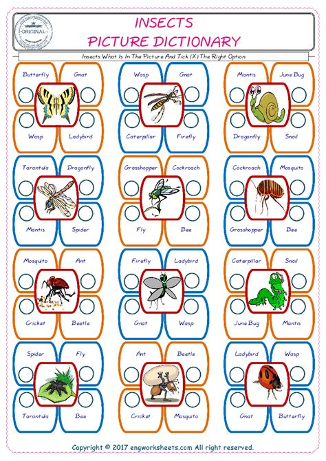 insects esl printable english vocabulary worksheets