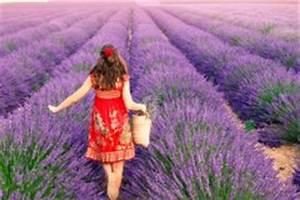 Lavendel Wann Schneiden : lavendel ernten wann ist der beste zeitpunkt ~ Lizthompson.info Haus und Dekorationen