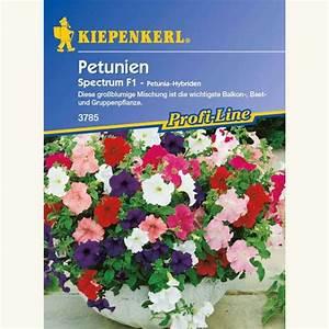 Petunien Samen Kaufen : samen saatgut petunie 39 spectrum f1 39 petunia hybriden ~ Michelbontemps.com Haus und Dekorationen