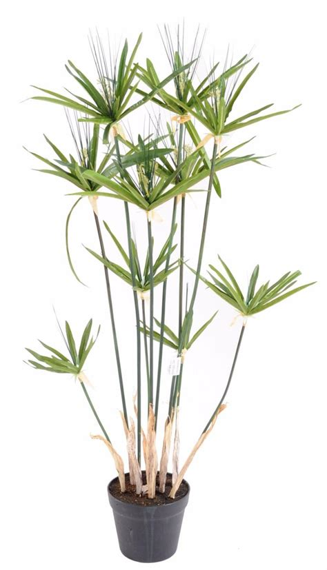 plante artificielle papyrus alternifolius en pot
