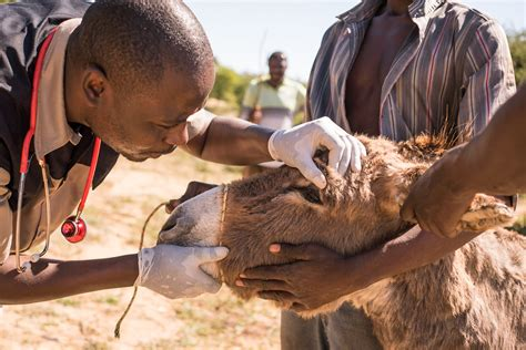 You can help us reach more working animals in need - SPANA