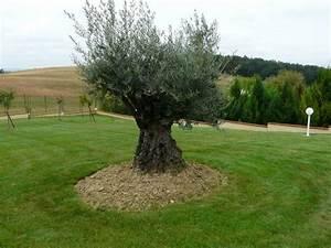 Les Jardins Du Sud : tonte et entretien de gazon paysagiste toulouse les ~ Melissatoandfro.com Idées de Décoration