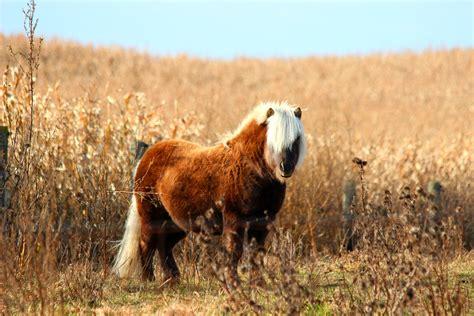 autumn fall horse mammals animals ontario canada t3i canon wallhere wallpapers hd