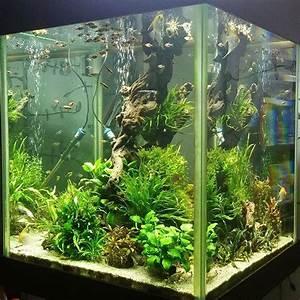 Die Besten Aquarien : die besten 25 nano aquarium ideen auf pinterest nano ~ Lizthompson.info Haus und Dekorationen