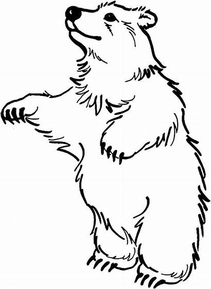 Bear Coloring Pages Standing Clipart Bears Stand