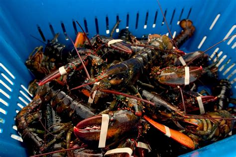 Shrimp And Lobster Are As Bad For The Climate As Eating