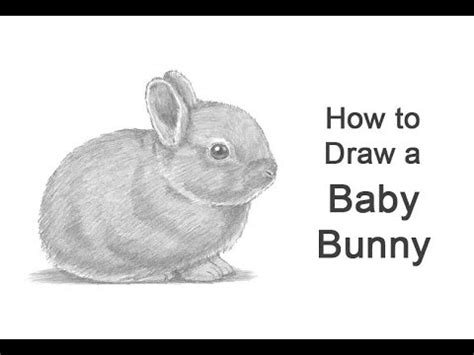 draw  rabbit baby youtube