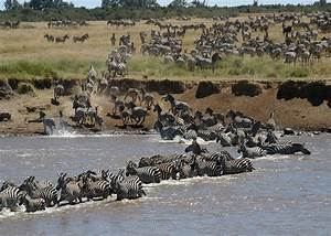 Masai Mara Migration 3 Days Safari Packages | Three Days ...