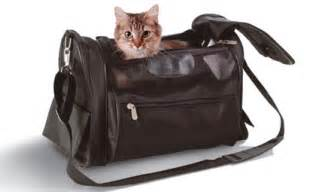 how to travel with a cat you must be trippin cat travel