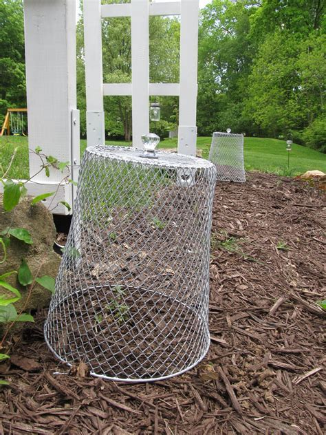 Garden Cloche Dollar Store DIY, How to Keep Pests Away