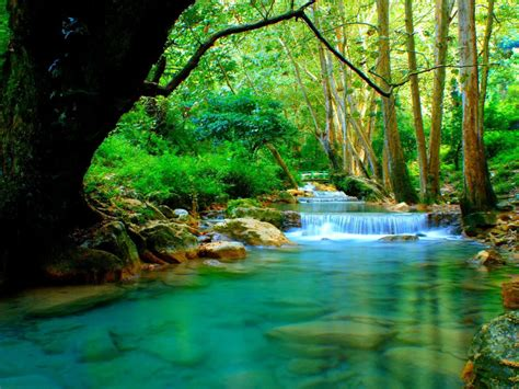 Forest river with cascades turquoise water rocks-trees ...