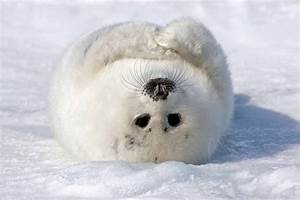 Animali nella neve: le foto più belle - Focus.it