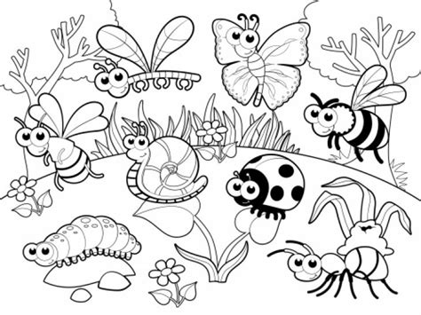 insect color pages drawing coloring bug coloring