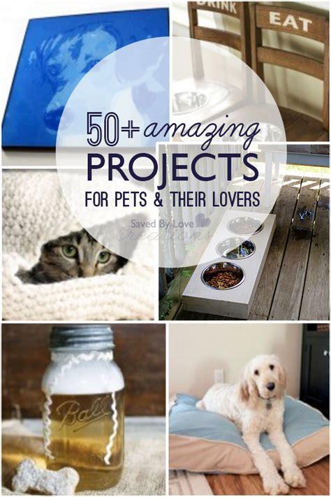 diy     pets  pet lovers